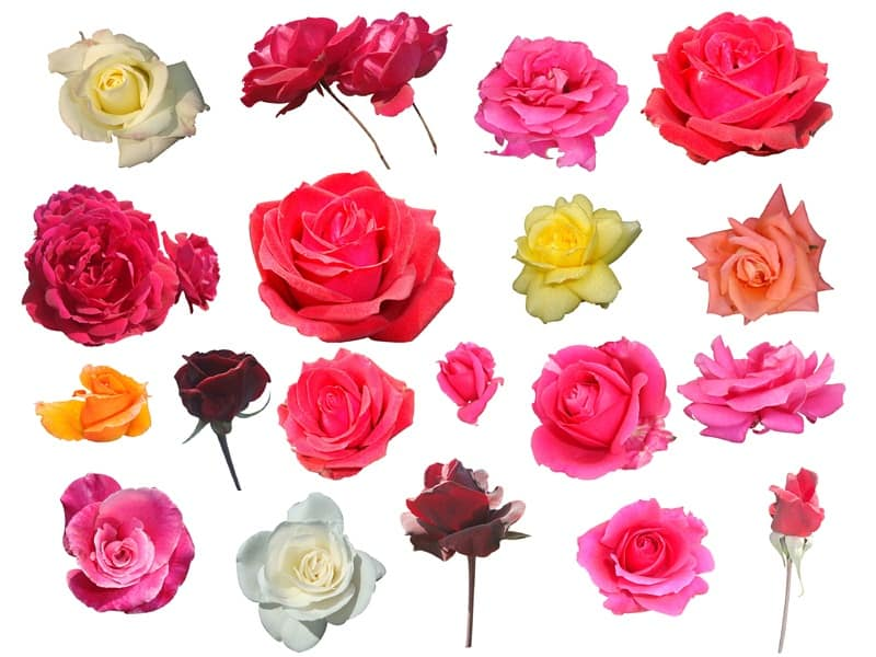 The different kinds of flowers